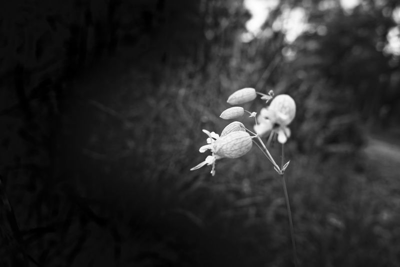 Beauty In Nature Black & White Black And White Photography Blackandwhite Blooming Blossom Close-up Flower Flower Black And White Flowers Focus On Foreground Fortheloveofblackandwhite Macro Natur Nature Nature No People Outdoors Park