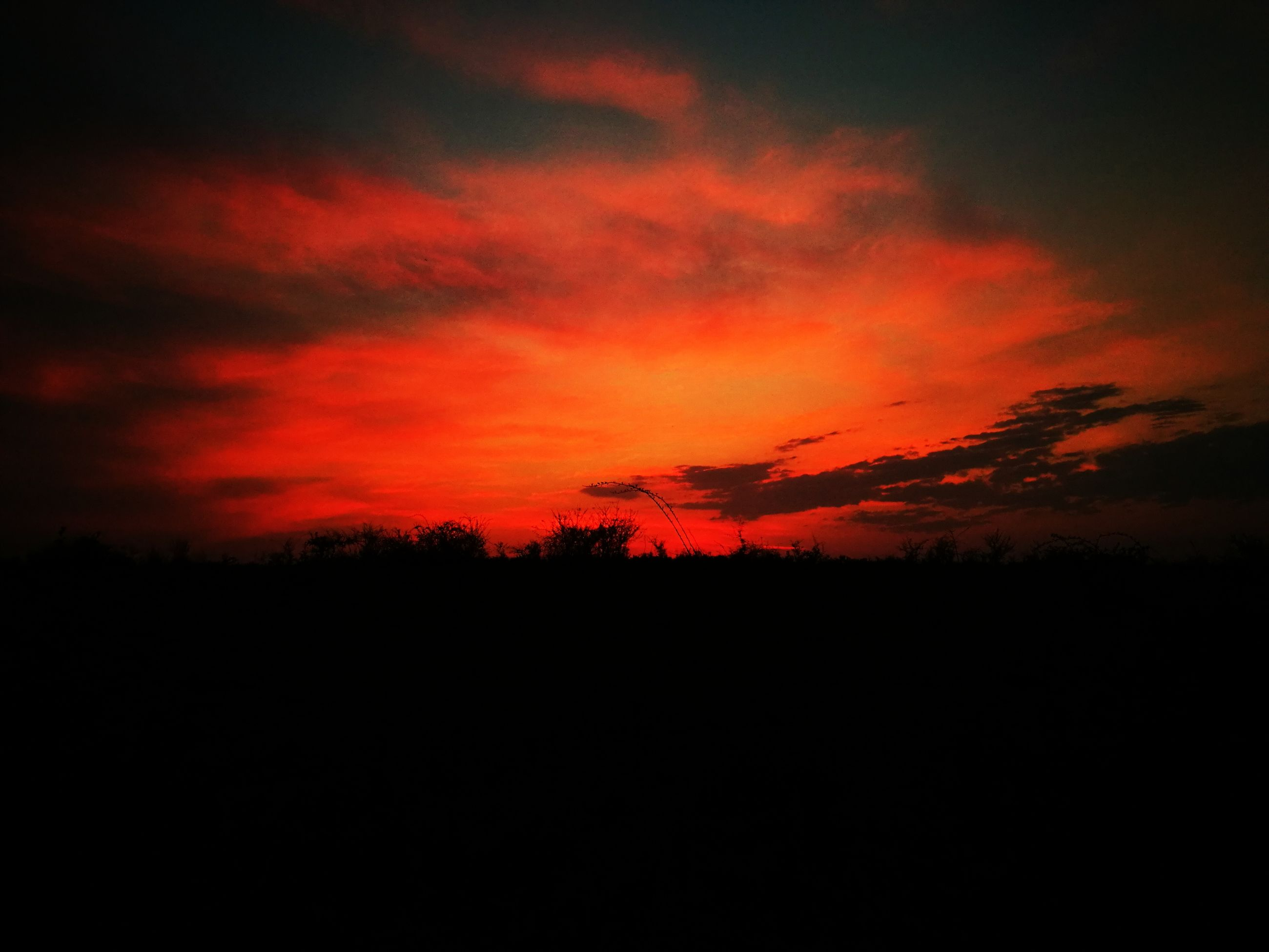 silhouette, sunset, nature, red, beauty in nature, sky, landscape, outdoors, no people