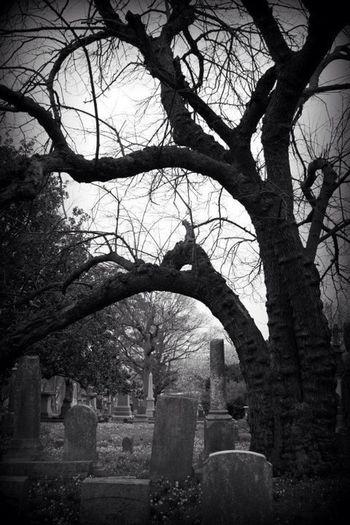 Black And White Graveyard Beauty EyeEm Best Shots