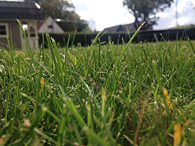 Beautiful picture on grass and my yard in the background. I love how the grass is focused instead of the background. Grass Hello World Enjoying Life Relaxing