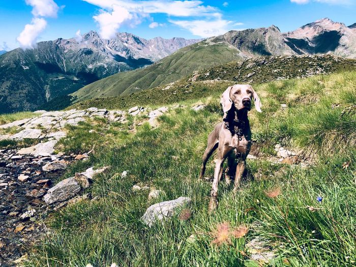 Dog standing in mountains