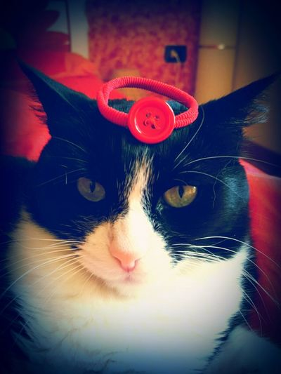 Selfcontrol Funny Cat