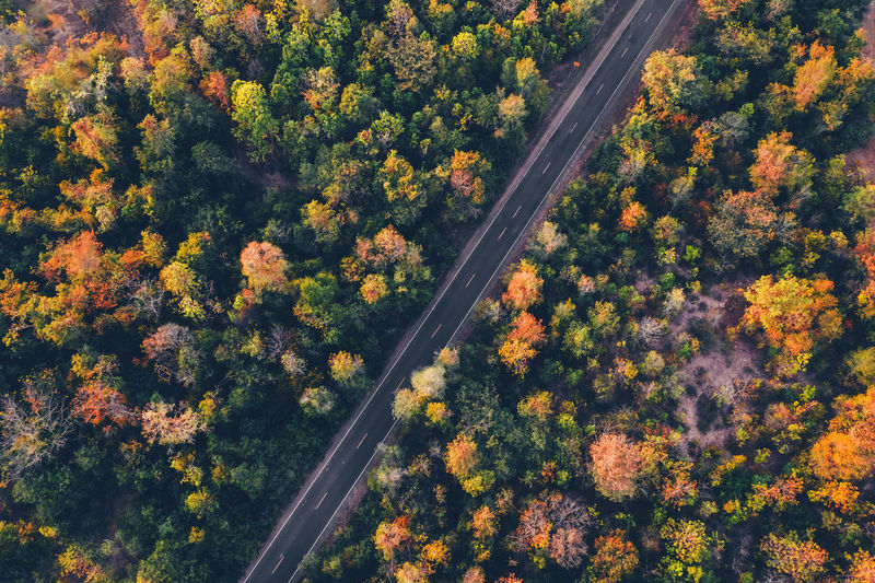 top view road with colorful forest in countryside Plant Tree Transportation Day Nature Growth Beauty In Nature High Angle View Road Scenics - Nature Land Aerial View Outdoors Tranquility Forest Autumn Landscape Tranquil Scene Tree Drone  Rural Scene Environment Autumn Orange Color Green Color