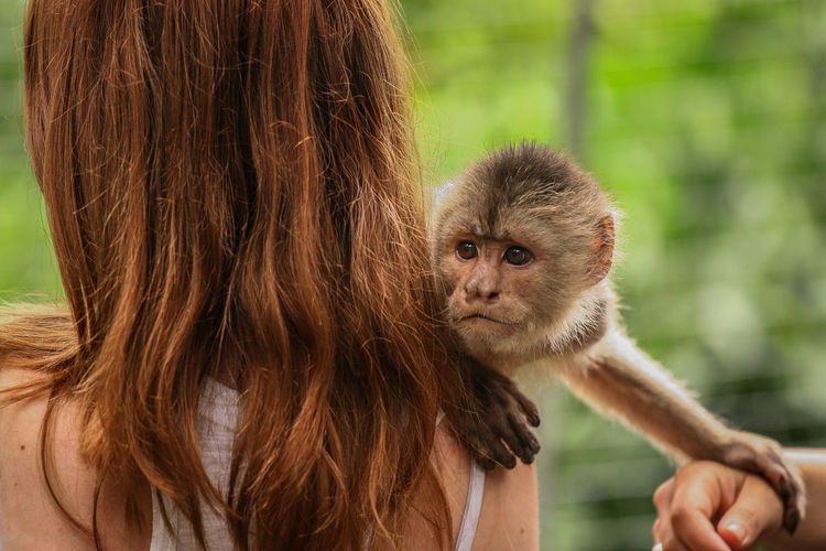Monkey touching woman and cropped hand