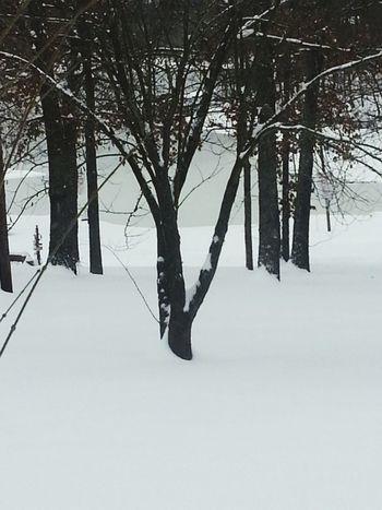 Snowmageddon Snowpocalypse Snow February2015 Tree Lake View
