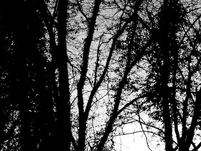Tree Nature Tranquility Low Angle View Growth Beauty In Nature Sky No People Outdoors Scenics Day Forest Silhouette