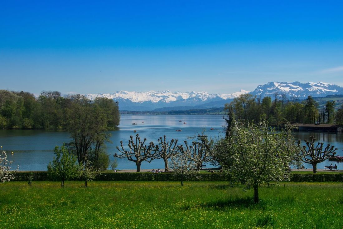 Sursee am See Lake Water Mountain Beauty In Nature Nature Scenics Blue Plant Sky No People Outdoors Day Grass Mountain Range Green Color Landscape Tranquil Scene Tranquility Tree Growth