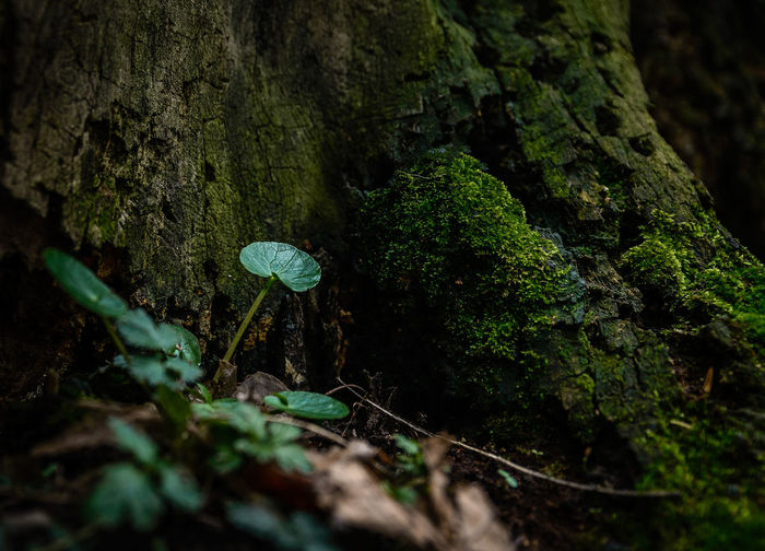 Beauty In Nature Close-up Day Forest Fragility Freshness Fungus Grass Green Color Growth Leaf Moss Nature No People Outdoors Plant Tranquility Tree