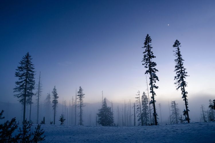 I pulled over at the summit of Santiam Pass in Oregon. It had been snowing and now it was clearing up just as the moon began to rise. The moonlight glowed as it shone through the frozen fog that was meandering through the trees. EyeEmNewHere Adventure West Coast Mountains Oregon Foggy Eerie Spooky Fog Night EyeEm Selects Winter Snow Cold Temperature Nature Tranquil Scene Beauty In Nature Tranquility Tree Landscape No People Scenics Blue Outdoors Clear Sky Sky