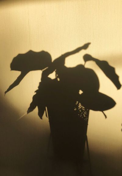Sunset shadows EyeEmNewHere EyeEm Market © EyeEm Nature Lover Beautiful Nature Beauty In Nature Natural Materials Exploring Nature Is Art Indoor Photography Indoor Plants Plant Shadow Plant Shadow Sunlight Focus On Shadow Nature Silhouette