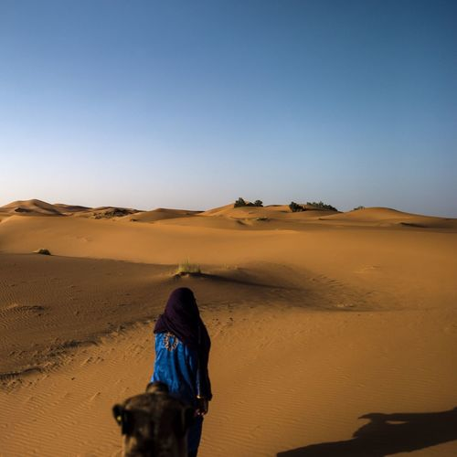 Rear view of berber walking with camel on desert against clear sky