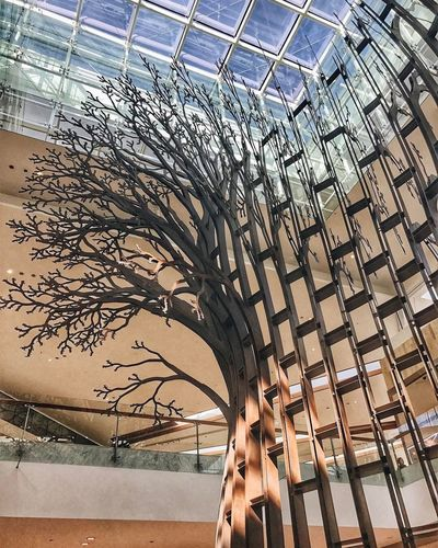 Yas Island yassmall Architecture Low Angle View Indoors  Tree Art