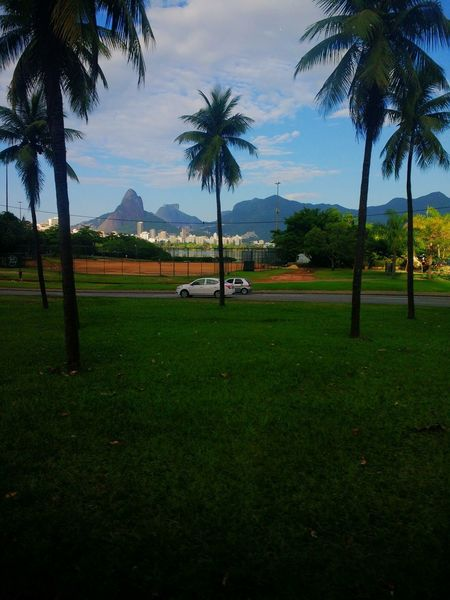 Rio de janeiro continua lindo Tree Palm Tree Playing Field Green - Golf Course Sport Tennis Golf Course Park - Man Made Space Sky Grass