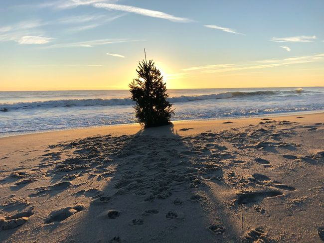 Holidays Sunrise Christmas Christmas Tree Sand Nature Sea Beach Beauty In Nature Sky Scenics Tree Tranquility Water Tranquil Scene No People Outdoors Horizon Over Water Day