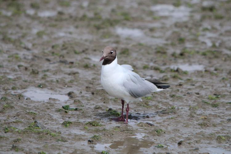 Bird Standing In Mud