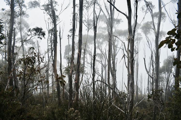 BANGER Dark Day Fog Foggy Morning Landscape Lifestyles Nature Trees