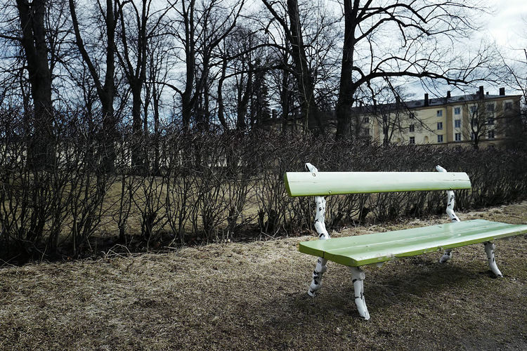Alone Bench Directly Above Green Melancholy Quiet Rural Sad Silent Trees Winter
