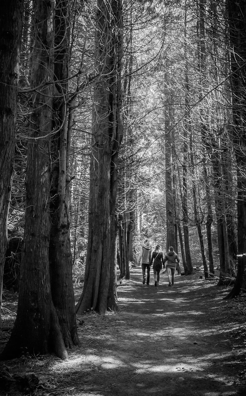Rear View Of Women Walking On Dirt Road Amidst Trees In Forest