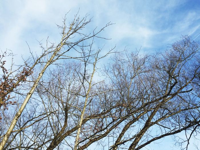 Nature Naturephotography Outdoorshot tree