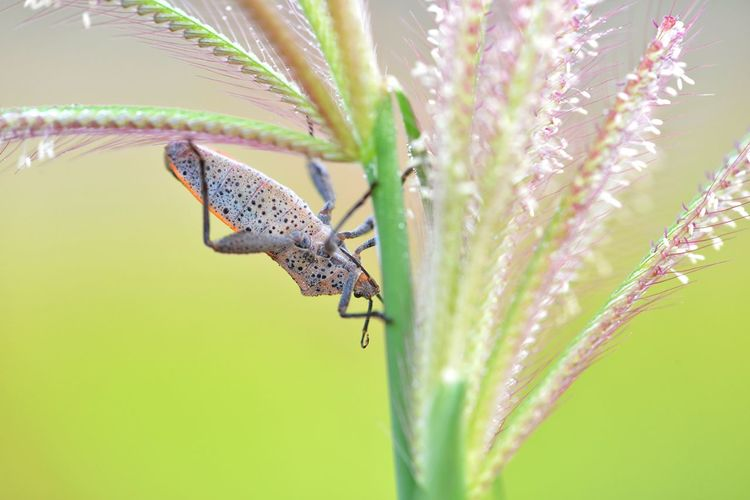 Close-up of shield bug on plant
