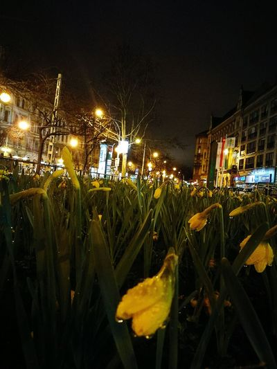 Spring in the air Night Rainy Nopeople Eye4photography  Street Citylife Spring Flower Illuminated City Sky