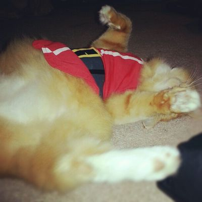 I just fell over dead from a santa shirt. LoL Now.... Can can somebody tell me how to get this thing off again? ;-)