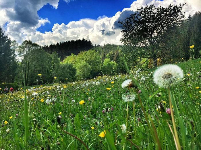 Hiking Wald Wiese  Wandern Hiking Thüringer Wald Thüringer Natur Thuringen Plant Growth Beauty In Nature Flower Sky Cloud - Sky Green Color Nature Day Grass