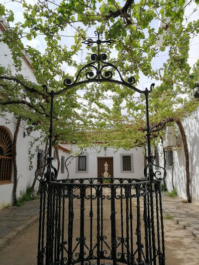 Andalusian decoration Teavel Destination Tourism Patio Water Well Vine - Plant Garden Beauty In Nature Nature Plants On The Wall No People Tree Gate Sky Architecture Built Structure Building Exterior Growing