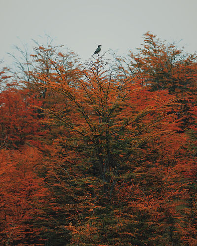 Animal Themes Animal Wildlife Animals In The Wild Autumn Bare Tree Beauty In Nature Bird Bird Of Prey Branch Day Low Angle View Nature No People One Animal Outdoors Perching Sky Tree