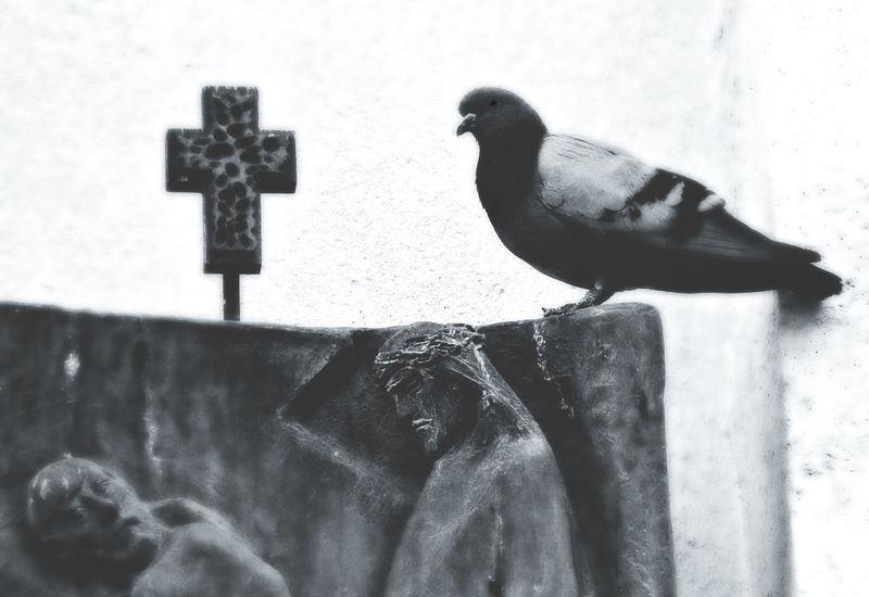 Animals In The Wild Bird Christ Day Jesus Christ No People Outdoors Religion Vatikan