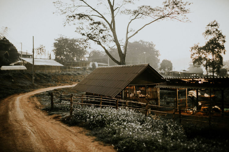 Chaingrai Country Road Road Thailand House Monning Nutered