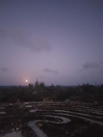 The labyrint @ alto vista Aruba Phonography  Samsungphotography Full Frame Full Length No People Nofilter NoEditNoFilter Nature Island Labyrinth Tree Winter Astronomy Field Rural Scene Sky Landscape Weather Bare Tree Foggy Overcast