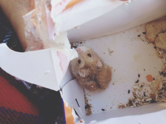 Bebeeeeeeeeé ? Hamster Bebe