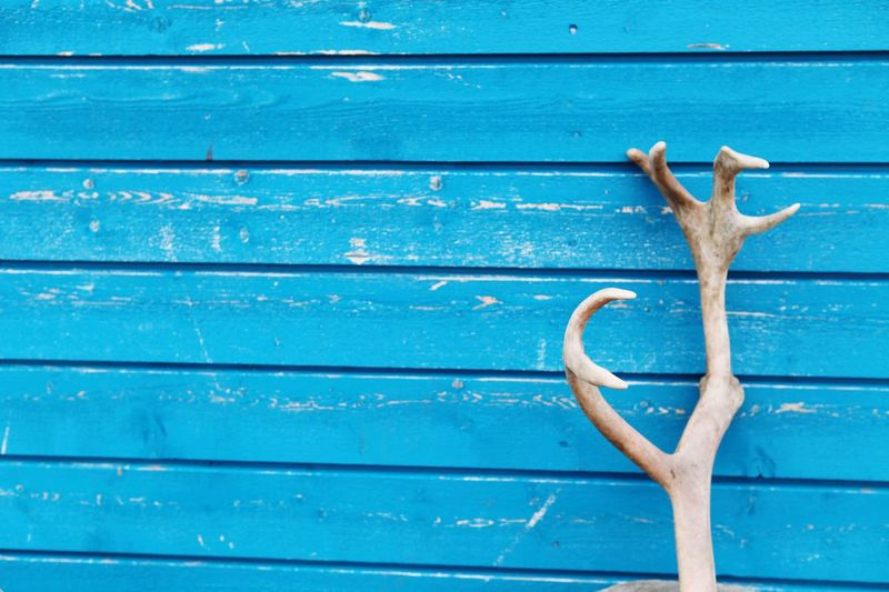 Wood - Material Blue Day Wall - Building Feature No People Old Pattern Entrance Backgrounds Full Frame Outdoors Plank Wood Close-up Nature Textured  Directly Above Safety Copy Space Animal Wildlife