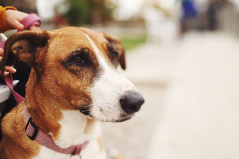 Dog love One Animal Animal Themes Domestic Domestic Animals Pets Mammal Animal Dog Canine Looking Looking Away Pet Collar Close-up No People Focus On Foreground Animal Head  Animal Body Part Day Collar Vertebrate