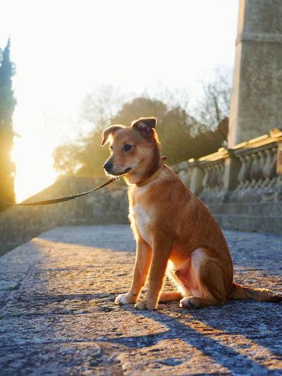 Dog sitting on stone wall
