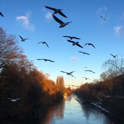 Bird Seagulls Hamburg Nature Winter Ice Alster Explore Goldbekkanal discover Discover Your City Discovery Animals In The Wild Water Outdoors Sky No People Beauty In Nature Germany Winterhude City Blue Sky Sun Adapted To The City