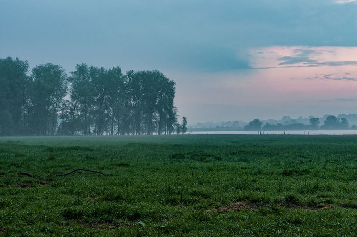 Farmland Agriculture Beauty In Nature Day Farmland Field Foggy Morning Grass Green Color Growth Landscape Morning Nature No People North Germany Outdoors Rural Scene Scenics Schleswig-Holstein Sky Tranquil Scene Tranquility Tree Water