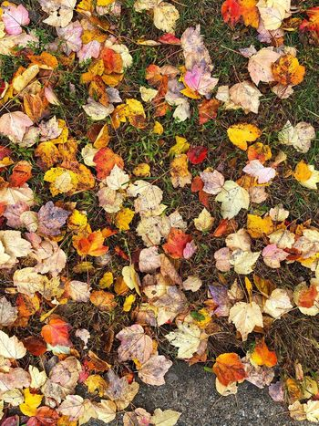 Day Vulnerability  Fall Autumn Collection Fragility Change Plant Part Autumn Season  Fallen Leaves Backgrounds Full Frame Multi Colored Pattern No People Textured  Art And Craft Abstract Outdoors Nature High Angle View Beauty In Nature Yellow Shape