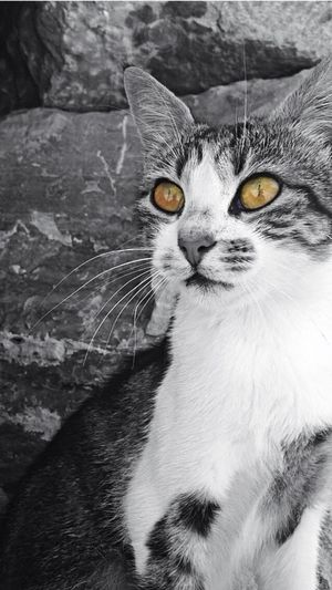 Cat Cats Cat♡ Colors Cool Turkey Black And White Blackandwhite Black&white Love