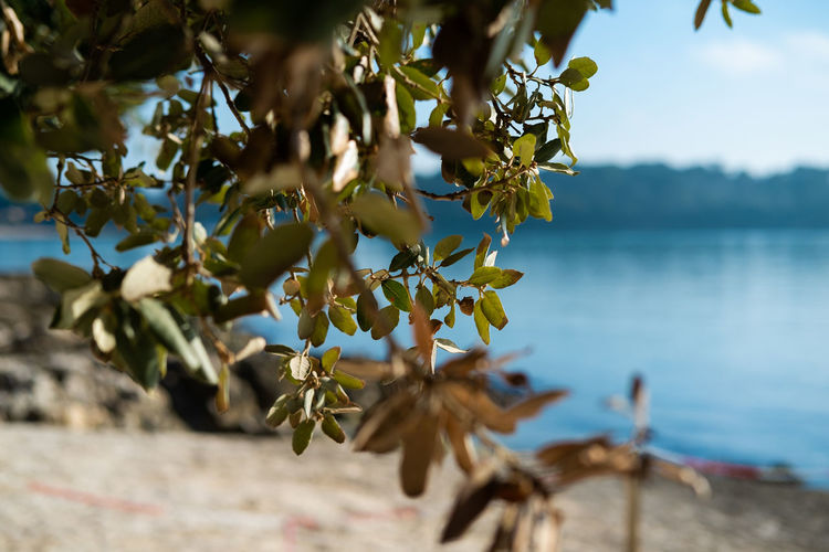 Inhale exhale the summer vibes Plant Growth Beauty In Nature Nature Flowering Plant Flower Tree No People Day Fragility Freshness Focus On Foreground Water Selective Focus Vulnerability  Close-up Plant Part Leaf Outdoors Flower Head Seaside_collection Seaside Exploring Sun Sunlight