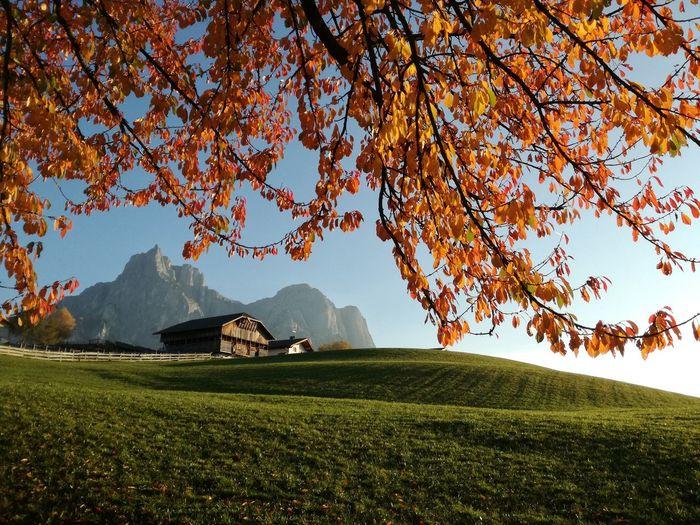 Mountain Field