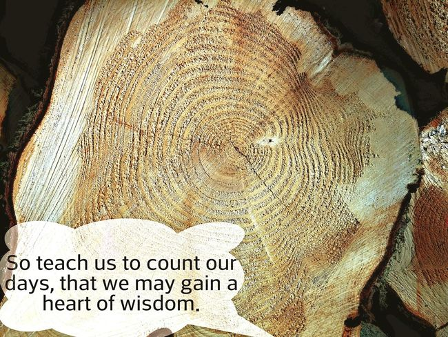 Words Of Wisdom Psalm 90 Tree Bible Verses Hello World Wood EyeEmBestPics Year Wisdom