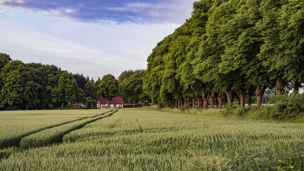 Landlust Agriculture Beauty In Nature Cloud Cloud - Sky Day Field Grass Grassy Green Green Color Growth Gut Rohlstorf Idyllic Landscape Lush Foliage Nature No People Outdoors Rural Scene Scenics Schleswig-Holstein Sky Tranquil Scene Tranquility Tree