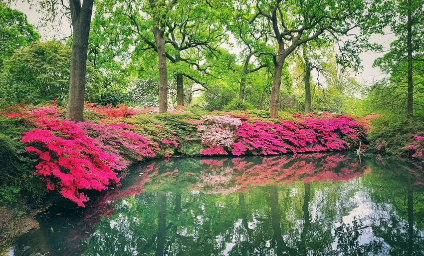 Pink flowering plants by lake in forest