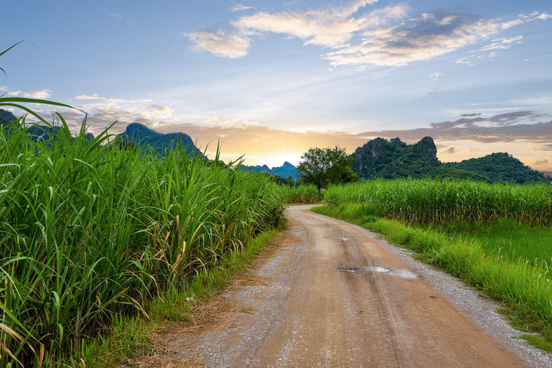 Agricultural Field Beauty In Nature Cloud - Sky Diminishing Perspective Direction Environment Field Grass Green Color Growth Land Landscape Long No People Outdoors Plant Road Scenics - Nature Sky Sugar Field Sunset The Way Forward Tranquil Scene Tranquility Transportation