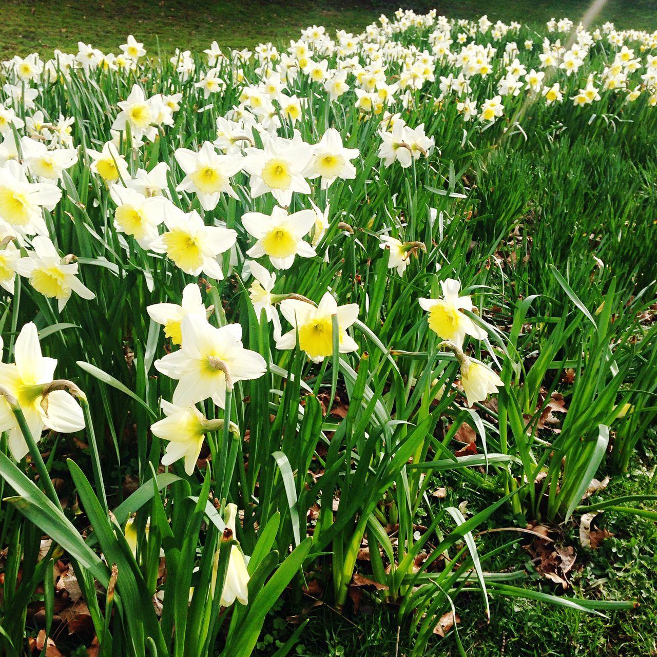 White Flowers In Field
