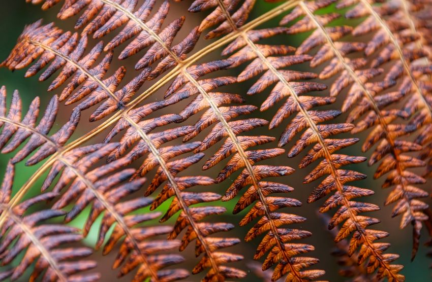 Autumn Ferns Backgrounds Beauty In Nature Close-up Day Full Frame Growth Nature Needle - Plant Part No People Outdoors Pattern Plant