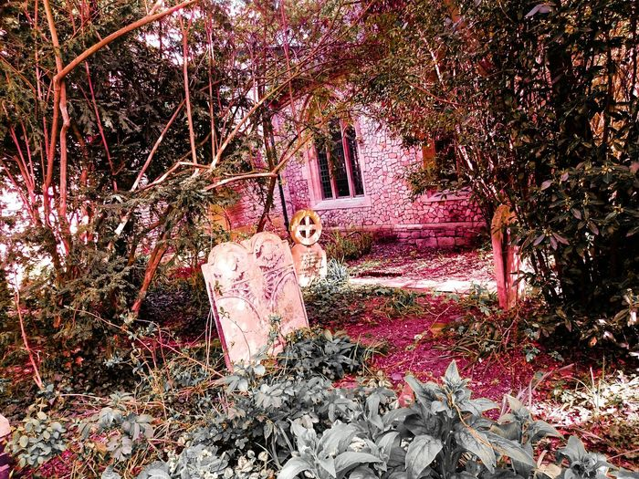 Tombstones Graveyard Beauty Gravestones Foliage Church Nature Beauty In Nature Exploring Dense Vegetation Archwindow