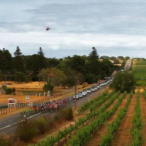 Tourdownunder Adelaide Mclaren Vale Bikes Helicopter Grapevines  Wine Australia Check This Out Hello World Taking Photos Relaxing Enjoying Life Tdu